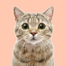 Кошки (221)
