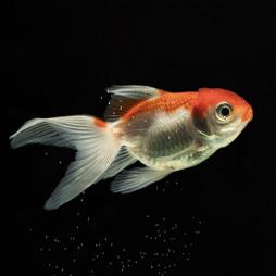 Рыбки (9)
